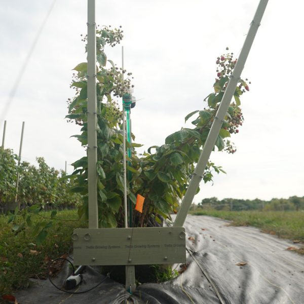 purchase your own growing hops trellis system