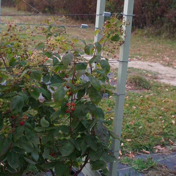 backyard trellis growing system