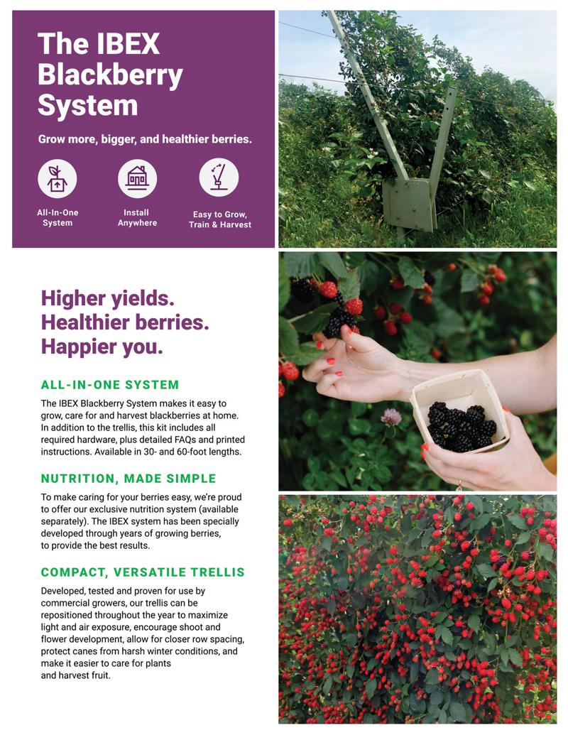 grow your own blackberries